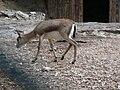 Gaziantep Zoo 1260144.jpg