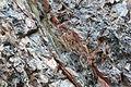 Gesteine am Ufer der Urft im Nationalpark Eifel-3535.jpg