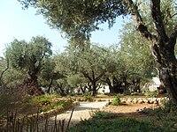 Getsemane2.JPG