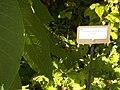 Giardino botanico di Brera (Milan) 178.jpg