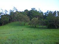 Image Result For Wisata Waduk Gajah