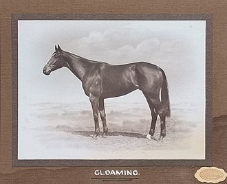 Gloaming (horse) - Image: Gloaming 1922 AJC Craven Plate Randwick Racecourse Owner George D Greenwood Trainer Richard J Mason