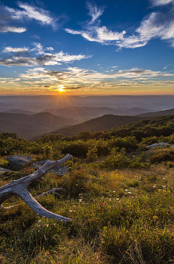 Deciduous and evergreen trees give the Blue Ridge Mountains their distinct color. Golden Sunset --Timber Hollow Overlook (22014263936).jpg