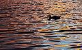 Golden Water (133207789).jpeg