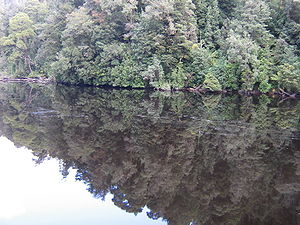 Gordon River - Reflections of the forest on the Gordon River.