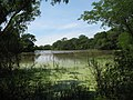 Gran Laguna cerca de estancia La Esmeralda - panoramio.jpg