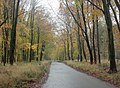 Grand Avenue Savernake Forest in autumn - geograph.org.uk - 1578283.jpg