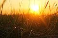 Grass (12305088296).jpg