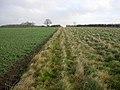Grassy corner - geograph.org.uk - 1078668.jpg