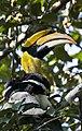 Great-hornbill 2 by N A Nazeer.jpg