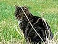 Green Hill cat, Green Hill - geograph.org.uk - 1222536.jpg