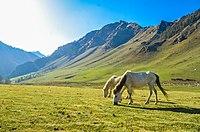 Greener grasses, brighter lights , beautiful horses and amazing sky.jpg