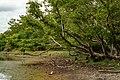 Greenly Wilpattu National Park.jpg