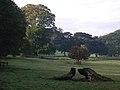 Grimston Park - geograph.org.uk - 573410.jpg
