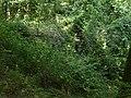 Gros Ouvrage du Soetrich (14880284340).jpg