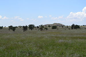 Group of Taurotragus oryx pattersonianus with three Giraffa camelopardalis tippelskirchi individuals north of Lion Rock within the LUMO Community Wildlife Sanctuary in Kenya.jpg