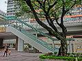 HK CWB HKCL tree 朴樹 Chinese Hackberry n escalators Nov-2013 04.JPG