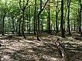Hambach forest 47.jpg
