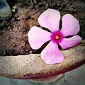Happy Dead Flower.jpg