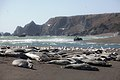 Harbor seals at Bodega Bay.jpg