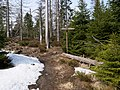 Harz near Bodebruch 05.jpg