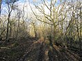 Haugh Wood in the North Riding of Yorkshire - geograph-6014374.jpg