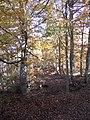 Hayas en Picos de Europa ( Sajambre ) - panoramio.jpg