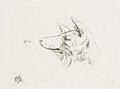 Head of a Dog from New Holland MET DP813214.jpg