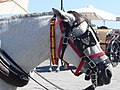 Head of carriage horse in Chania, Creta 01.jpg
