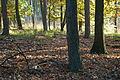 Herbst Elfenmeer 6.jpg