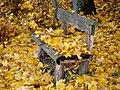 Herbstlaub auf einer Bank.jpg