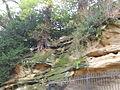 Highfields Park sandstone 9161.JPG