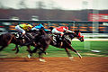 Horse Race Finish Line (11888565543).jpg