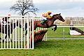 Horse racing (3310045714).jpg