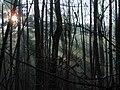 Hra slnečných lúčov ^ Play the Sun's rays - panoramio.jpg