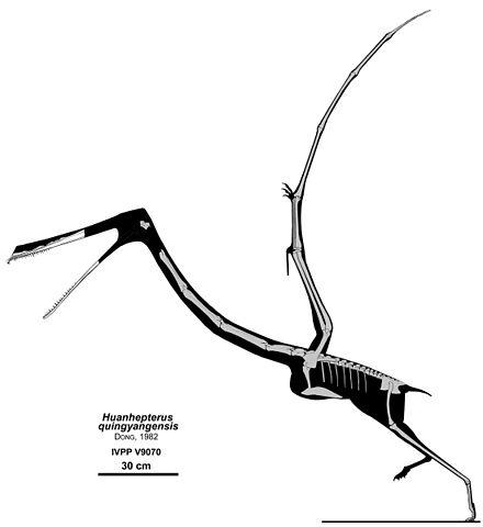 Huanhepterus