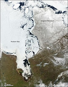 In late spring (May), large chunks of ice float near the eastern shore of the bay, while to the west, the center of the bay remains frozen. Between 1971 and 2003, the length of the ice-free season in the southwestern part of the Hudson Bay — historically the last area to thaw — had increased by about 3 days.