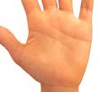 Human Palm.png