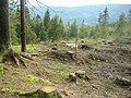 Hurdal forest in mountain - panoramio.jpg