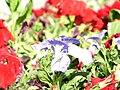 IMG 1155 Flowers.jpg