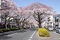 Ibaraki Prefectural Route-293 04.jpg
