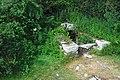 Ile-aux-moines lavoir 0708.jpg