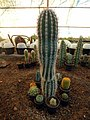 "Iran-qom-Cactus-The greenhouse of the thorn world گلخانه کاکتوس ""دنیای خار"" در روستای مبارک آباد قم- ایران 26.jpg"