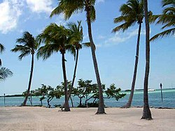 One of a few beaches on the اقیانوس اطلس side of Islamorada