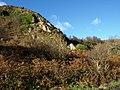 Ivy Craig, Great Cumbrae Island - geograph.org.uk - 669658.jpg