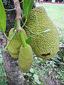 Jackfruit in Lamut Ifugao Church 01.jpg