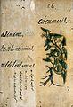Japanese Herbal, 17th century Wellcome L0030063.jpg