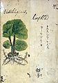 Japanese Herbal, 17th century Wellcome L0030121.jpg