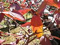 Japanese nature leaf.jpg