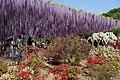 Japanese wisteria, Ashikaga Flower Park 13.jpg